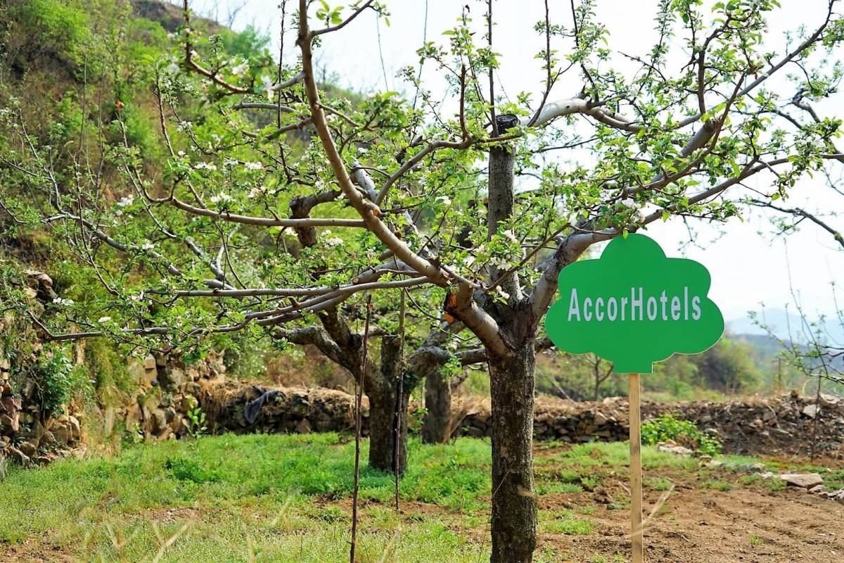 AccorHotels Launches Give a Tree campaign in Greater China