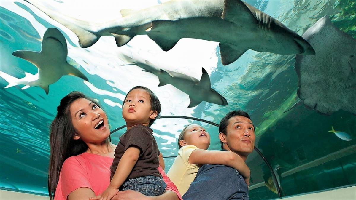 SEA LIFE Malaysia is Set to Open on 9th May 2019