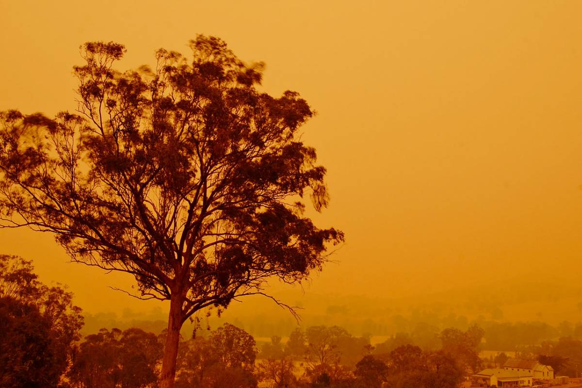 Tourist Industry Supports Australian Bushfire Relief