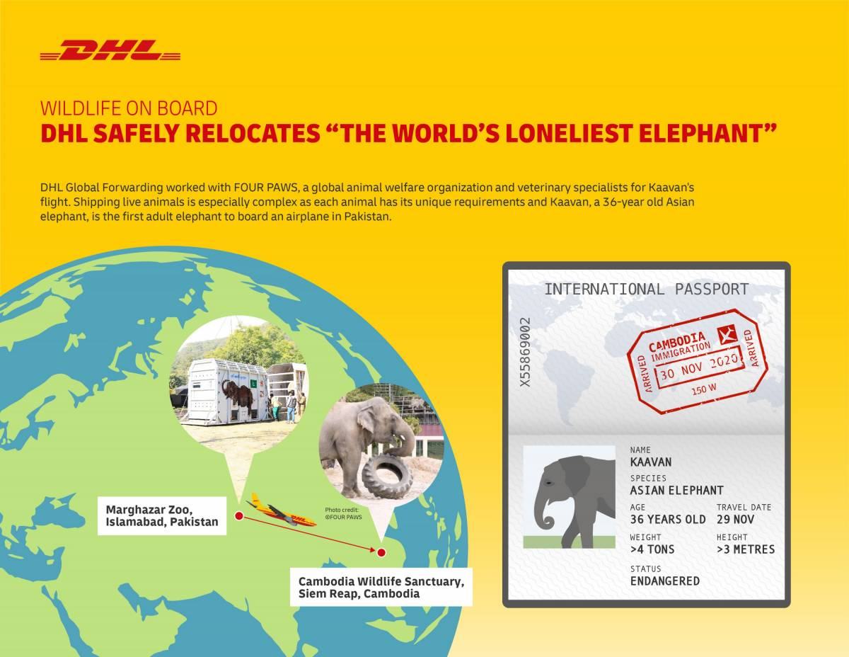 Wildlife on board: DHL Safely Relocates