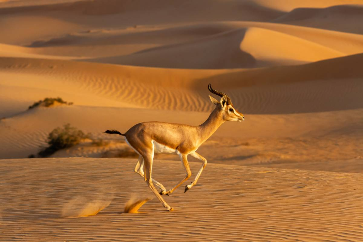 Emirates Group Reaffirms Commitment to Wildlife and Habitat Conservation