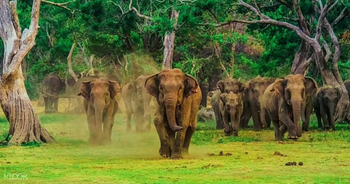 SRI LANKA TOURISM IN THE COVID19 ERA