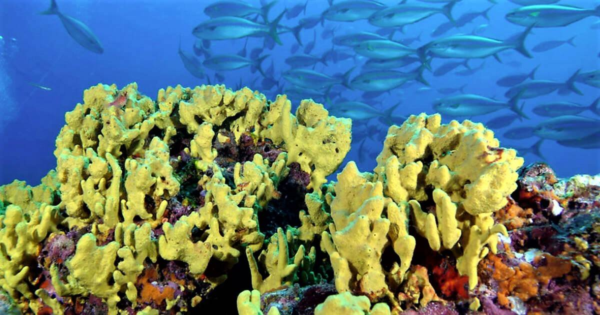 Panamaexpands the limits of the Cordillera de Coiba protected area