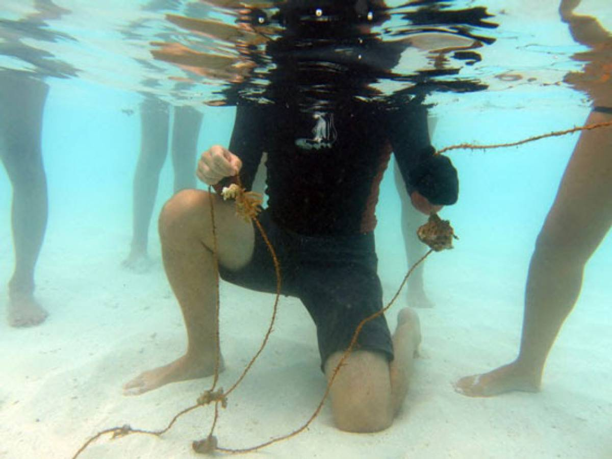 Coral Regeneration Initiative Underway at Outrigger Resort in Maldives